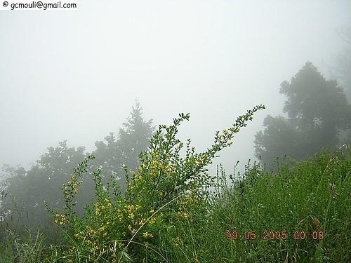 misty1.jpg