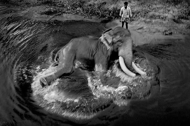 elephants_01.jpg