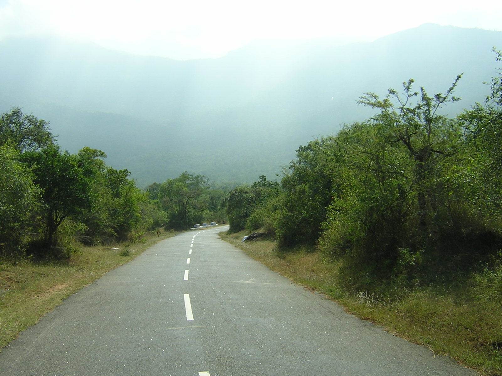 Masinagudi route between Ooty and Bandipur